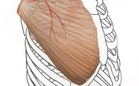 Pectoralis major flap